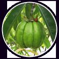 HCA Fruit